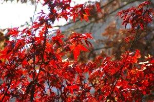 fall in wheaton
