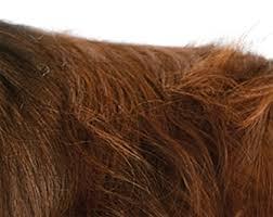 doghair